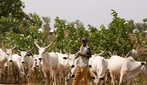Herdsmen on Rampage: Follow the Money