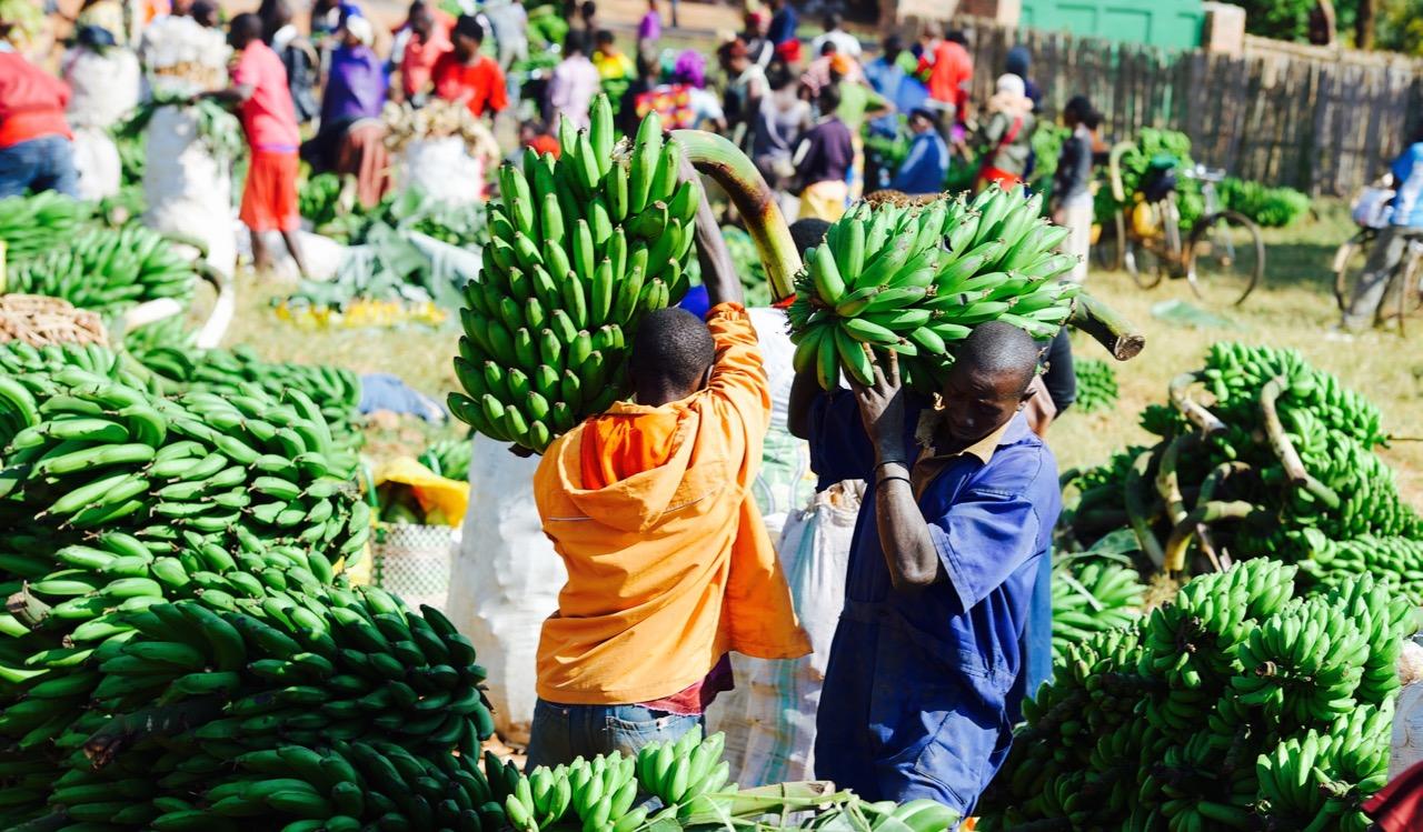 Unlocking Nigeria's Agriculture Potential